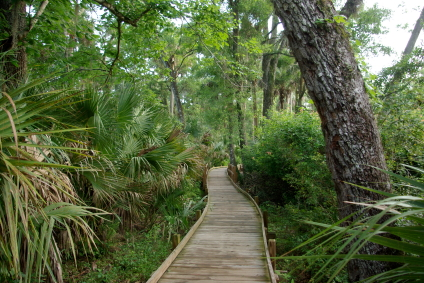 Ocala National Forest Trails
